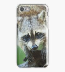 The Curious Raccoon iPhone Case/Skin