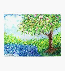 Flowering Tree for Janice Photographic Print