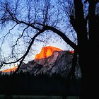 Half Dome, Yosemite National Park by Eric Kulikoff