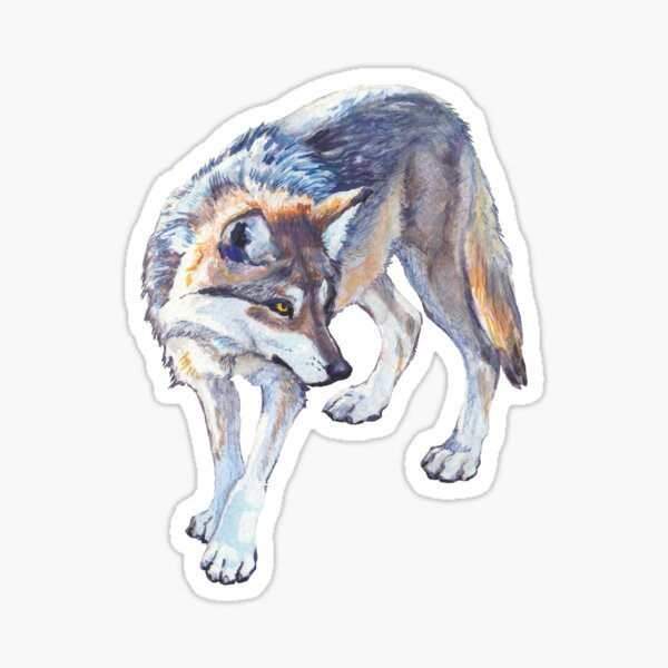 Mexican Gray Wolf Watercolor Illustration Sticker