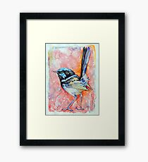Superb Fairy Wren Framed Print