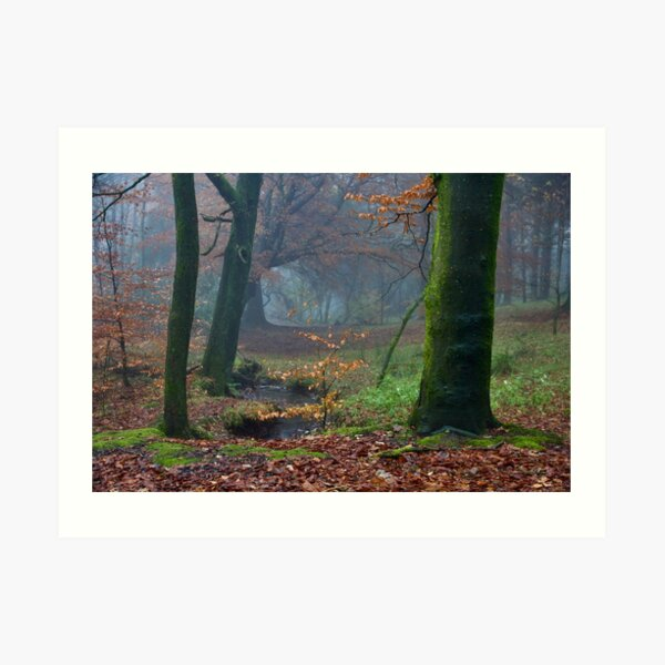 Moody Autumnal Woodland Art Print
