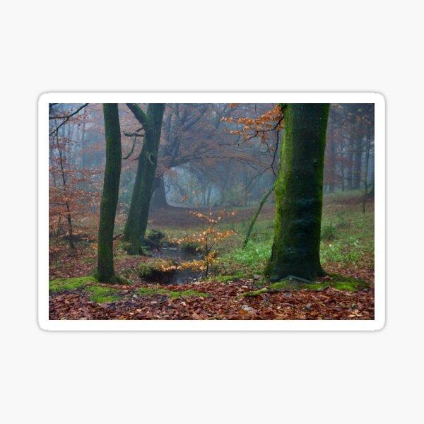 Moody Autumnal Woodland Sticker