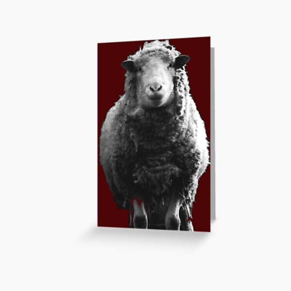 Sheep I've Known Greeting Card
