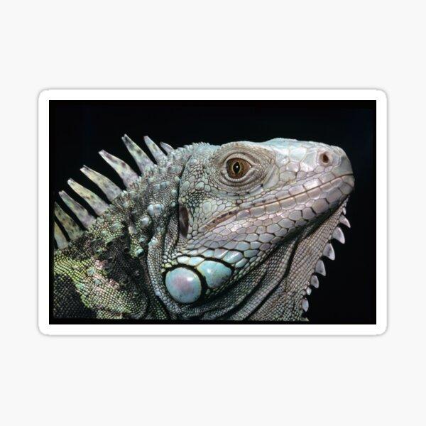 The Iguana Sticker