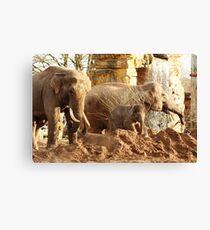 Elephant family, Chester Zoo Canvas Print