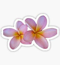 Frangipani Flowers Sticker