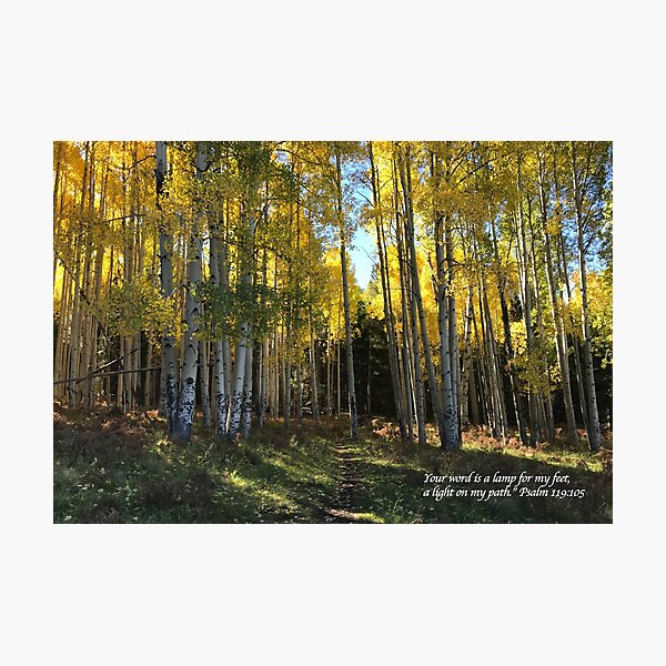 Aspen Trail with verse - From ccnow.info Photographic Print