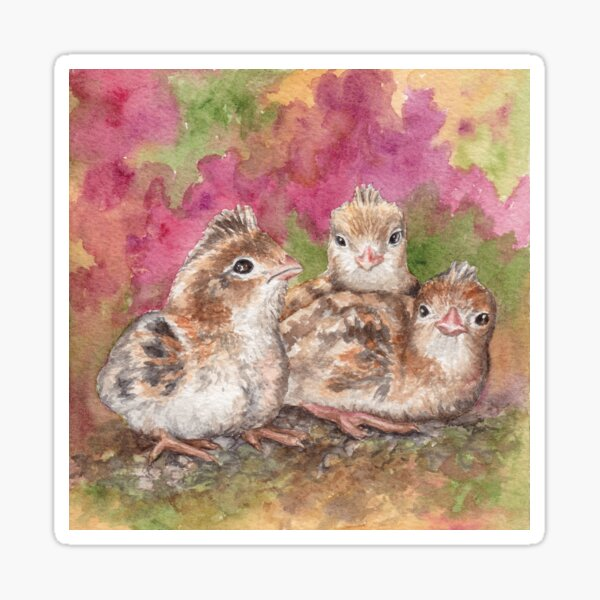 Baby Quails, Sonoran Desert Sticker