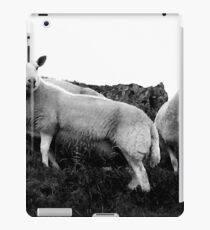Herdwick Sheep in the Lake District National Park, UK iPad Case/Skin