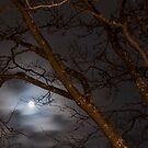 Full Moon Rising - 1 ©  by © Hany G. Jadaa © Prince John Photography