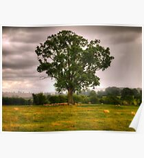 Sheep Take Shelter Under The Tree Poster
