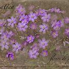Hepatica - les fleurs de printemps by Marilyn Cornwell