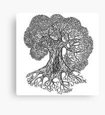 Big Oak Tree Canvas Print