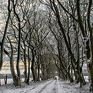 Winter Avenue by M S Photography/Art