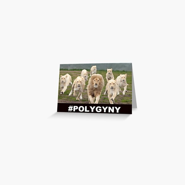 Polygyny lions Greeting Card