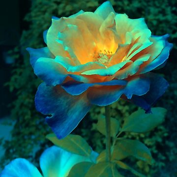 Heart of Gold Fairy Blue Rose by abigailryder