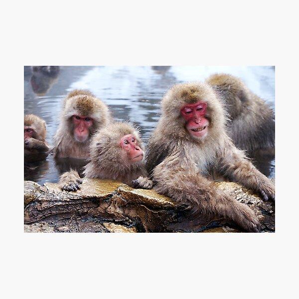 Snow monkeys Photographic Print