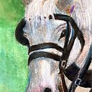 HORSE PORTRAIT by Brenda Thour