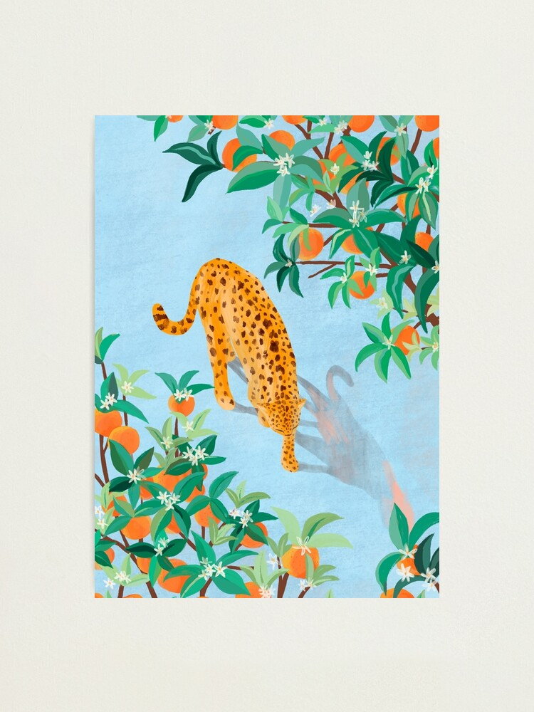 Alternate view of Leopard and Orange Trees Photographic Print