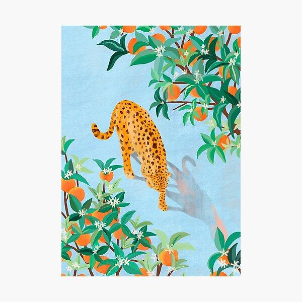 Leopard and Orange Trees Photographic Print