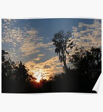Sun setting in the forest Poster