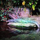 Magic Alligator by ninaortiz