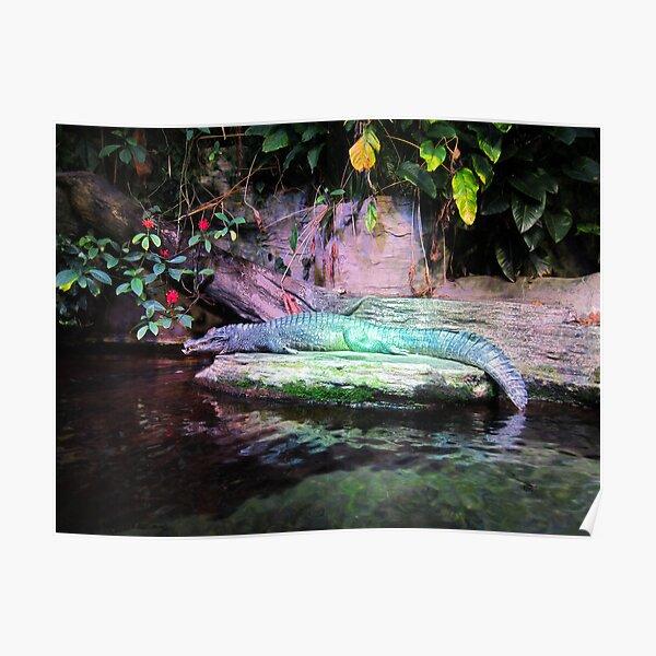 Magic Alligator Poster