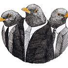 Three common black birds by Goran Medjugorac