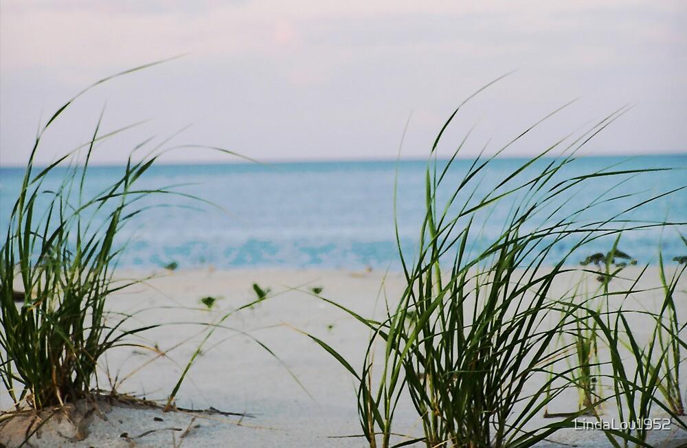 Windswept Beach by LindaLou1952