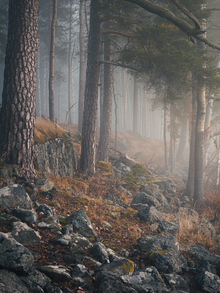 Foggy forest landscape by Juhku