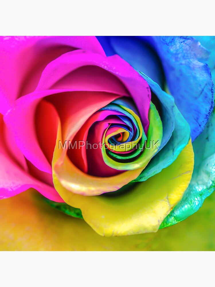 Rainbow Rose by MMPhotographyUK