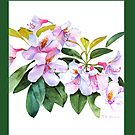 Pink and White Rhododendron Throw Pillow (Green Background) by Pat Yager