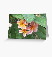 Suburban Rainforest Greeting Card