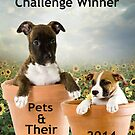 Pets Generic Banner by Vicki Childs