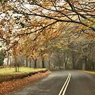 Misty Avenue - Mt Wilson NSW Australia by Bev Woodman