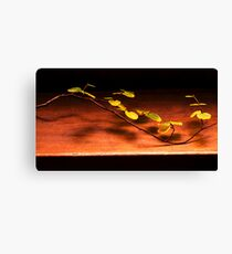 Comp day fagus week 2014 Canvas Print