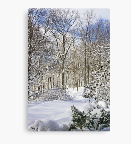 Snowy Winter Wonderland Canvas Print