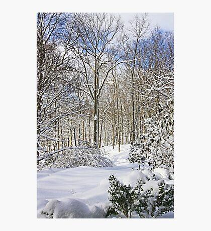 Snowy Winter Wonderland Photographic Print