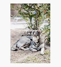 A lazy dog lying in the yard Photographic Print
