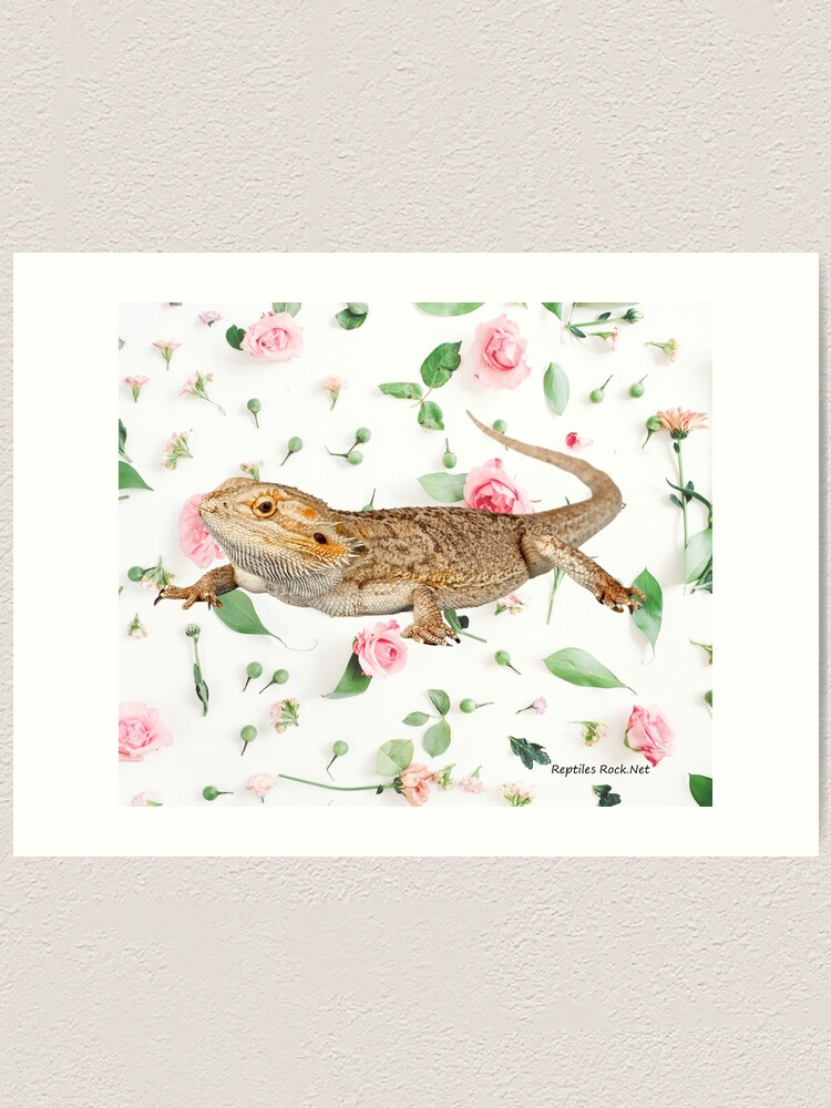 Alternate view of Bearded Dragon On A Carnation Background Art Print