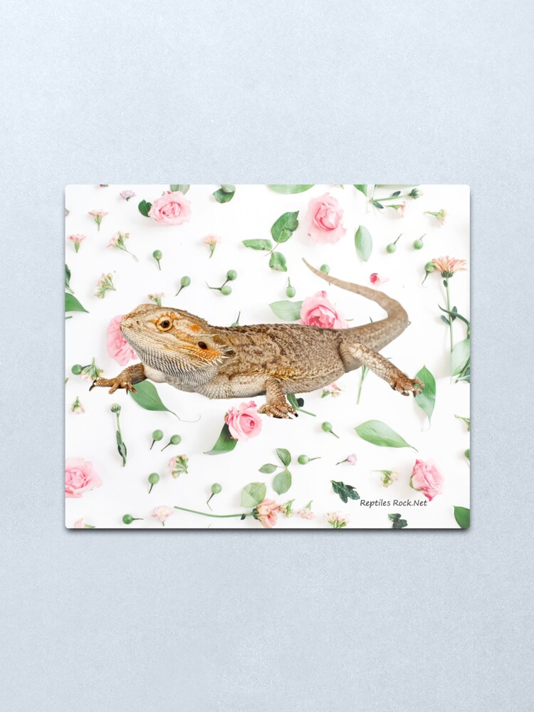 Alternate view of Bearded Dragon On A Carnation Background Metal Print