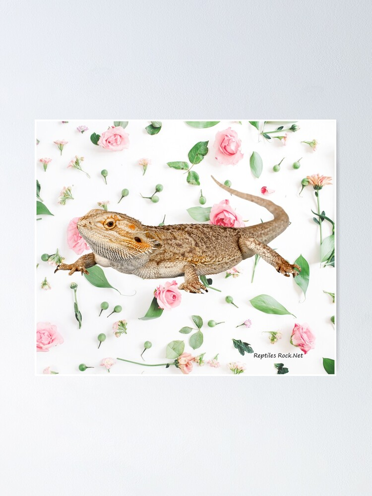 Alternate view of Bearded Dragon On A Carnation Background Poster