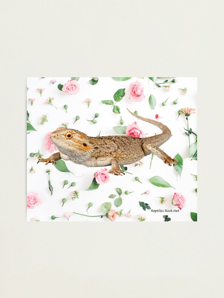 Alternate view of Bearded Dragon On A Carnation Background Photographic Print