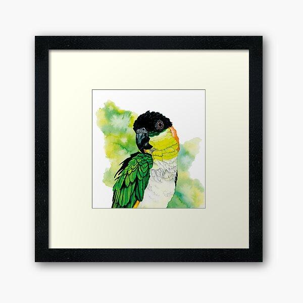 Perroquet à bride verte '' Gorbi '' Impression encadrée