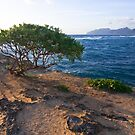 Tree By The Sea by David Kocherhans