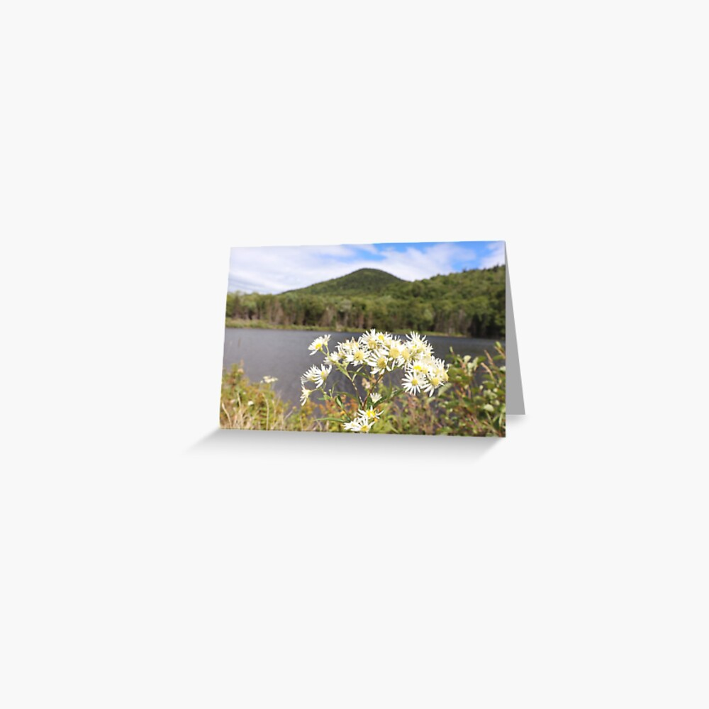 Daisies and Mountains Greeting Card
