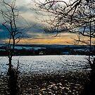 Winter Fields by Mark Smith