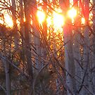 Aspen Sunset by Christine Ford