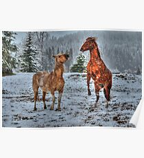 Spring Snow & Horse Play Poster